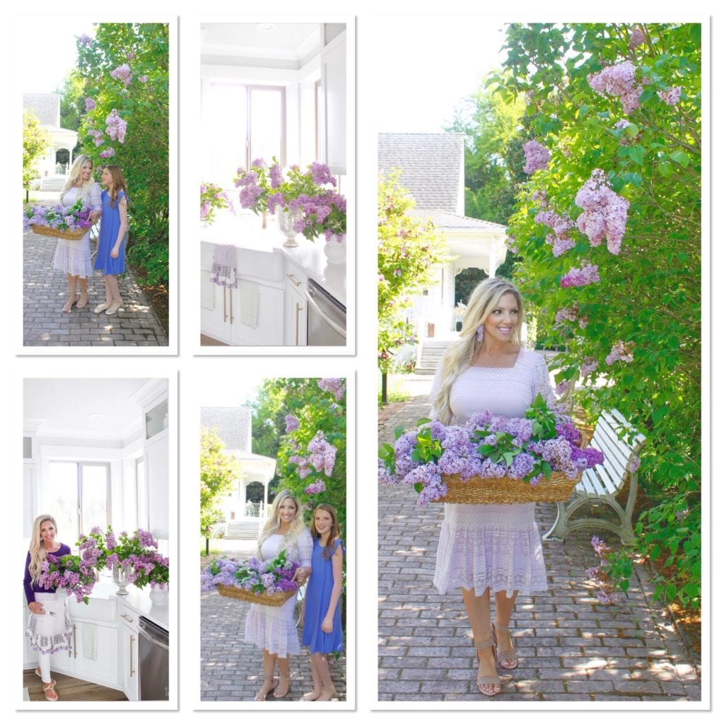 summer adams designs lilacs, lilac flower arrangements, Fresh lilacs, hulda klager lilac gardens woodland washington
