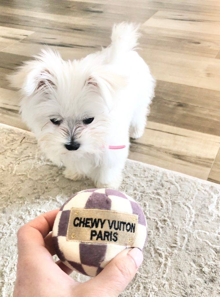 chewy vuiton puppy dog fetch ball amazon haute diggity dog, white Maltese female puppy dog