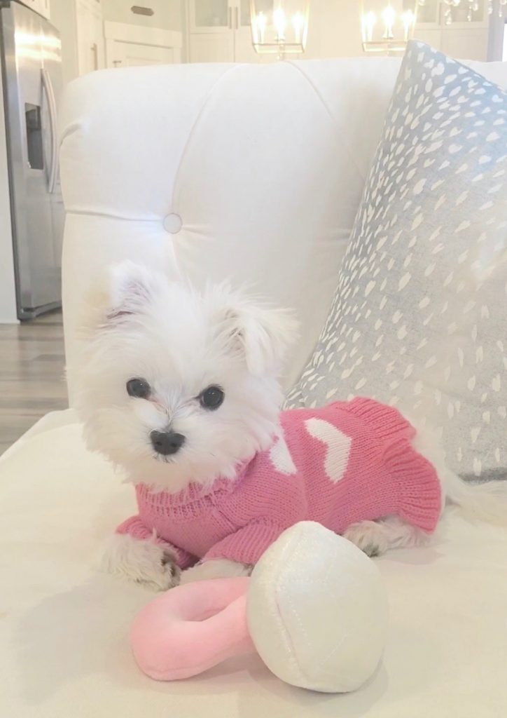 vanderpump pets, diamond ring plush pet toy, toy maltese puppy, puppy in pink sweater, amazon chew toys, posh pet accessories for puppies